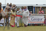 pic of camels at South Glos Show